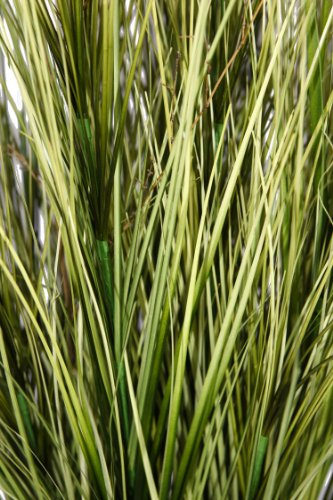 Laura ashley 60 inch tall onion grass with twigs home for Tall grass decor