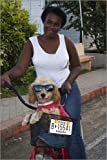 photo poster Portrait of woman with dog in bike basket. in size: 40 x 60 cm by C. Fredriksson