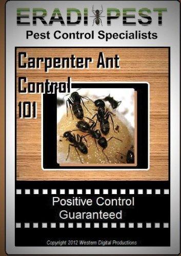carpenter-ant-pest-control-101