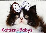 Katzen-Babys (Wandkalender immerwährend DIN A3 quer): Verschiedene Rassekatzen-Babys zum verlieben! (Monatskalender, 14 Seiten) (CALVENDO Tiere)