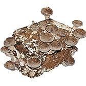 しいたけ栽培『このまんま』 菌床1個入り 家庭で採れる新鮮な椎茸