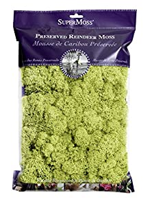 SuperMoss (21669) Reindeer Moss Preserved, Chartreuse, 8oz