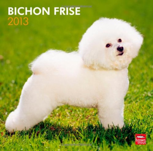 Bichon Frise 2013 Square 12X12 Wall Calendar