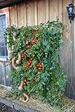 Space Saving, Vertical, Organic Vegetable, Sky Scraper Gardening System