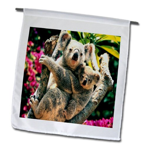 Baby Koala Images front-1039927