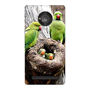 Cute Parrot House Multicolor Back Case Cover for Yu Yuphoria