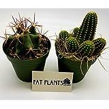 Fat Plants San Diego Large Cactus Plant(s) (2)