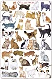 (24x36) Cats of the World Educational Science Chart Poster