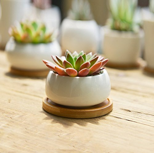 sun-e-modern-white-ceramic-succulent-planter-pots-mini-flower-plant-containers-with-bamboo-saucers-f