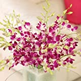 10 Singapore Orchids by Sendabunch, Guernsey Flowers