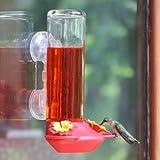 Garden Song 455-3 Window Mounted 14-Ounce Glass Hummingbird Feeder