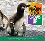 img - for A Penguin Chick Grows Up (Baby Animals (Carolrhoda Books Paperback)) book / textbook / text book