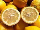 レモン2.5kg 九州産 無農薬・防腐剤・防かび剤・ワックス不使用