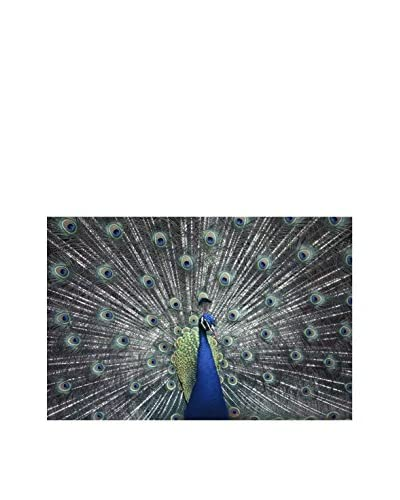 Brewster National Geographic Peacock Poster Decal
