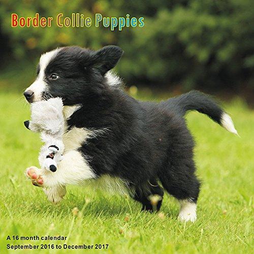 border-collie-puppies-calendario-2017