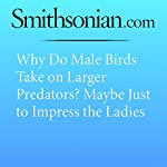 Why Do Male Birds Take on Larger Predators? Maybe Just to Impress the Ladies   Jason Bittel