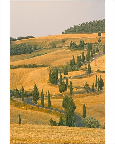 photographic-print-of-cypress-trees-along-rural-road-near-pienza-val-d-orica-siena-province