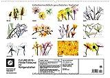Image de FLEURS 2015 - Florale Fotokunst mit Röntgenstrahlen (Wandkalender 2015 DIN A2 quer): Jenseits des L