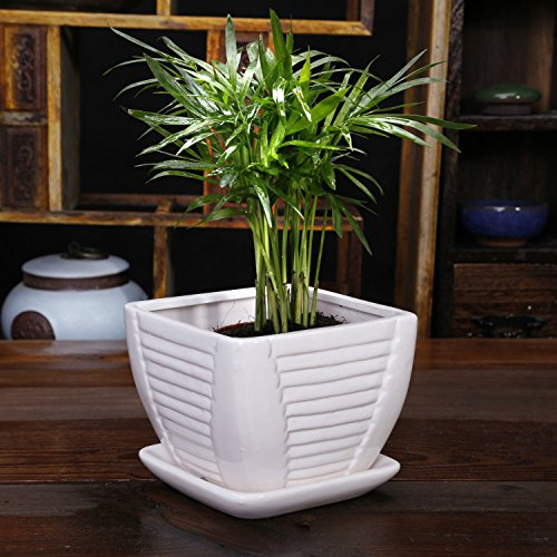White Ceramic Flower Pot / Plant Pot, Square, with Attached Saucer, with Drainage Holes
