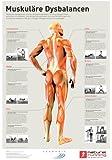 Muskuläre Dysbalancen