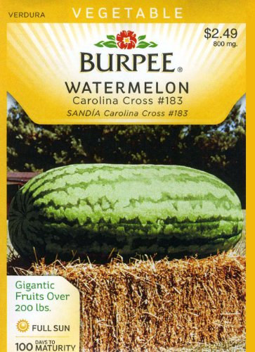how to grow carolina cross watermelon