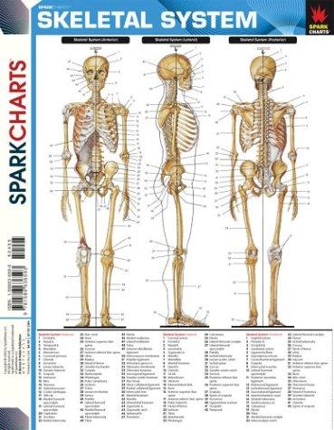 Skeletal System (SparkCharts)