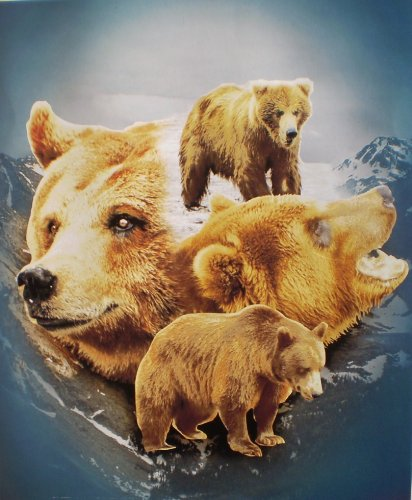 Grizzley Bears Super Soft Fleece Throw Blanket Wildlife Gift Idea 50x60