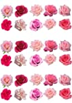 30 Gorgeous Mixed Pink Rose Flower Ed...