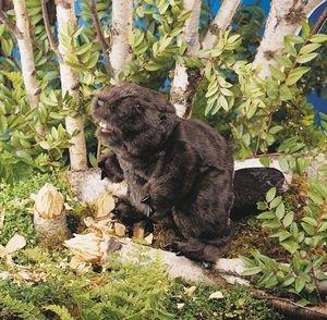 Folkmanis Puppet Beaver from Folkmanis