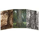 Constable Concertina Greeting Card - Three Tree Studies