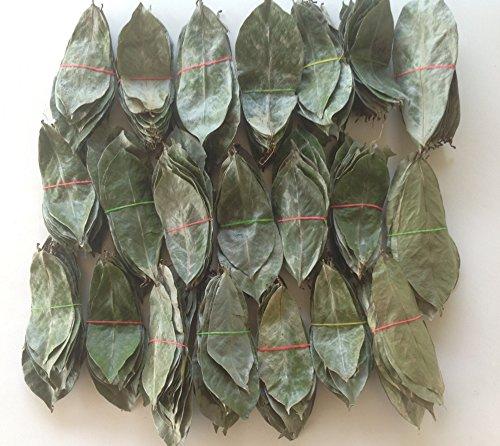 Soursop Graviola Annona Muricata Guyabano 1000 Shadow Dried Leaves