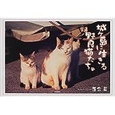 城ヶ島に生きる野良猫たち