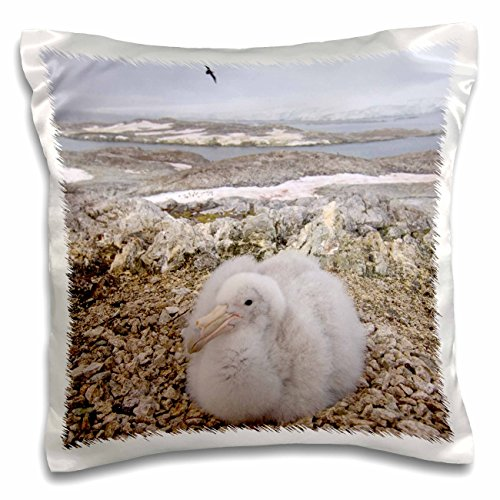 Danita Delimont - Birds - Southern giant petrel bird, Antarctic Peninsula-AN02 SKA0594 - Steve Kazlowski - 16x16 inch Pillow Case (pc_70661_1)