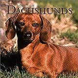 Dachshunds, Miniature 2004 Calendar