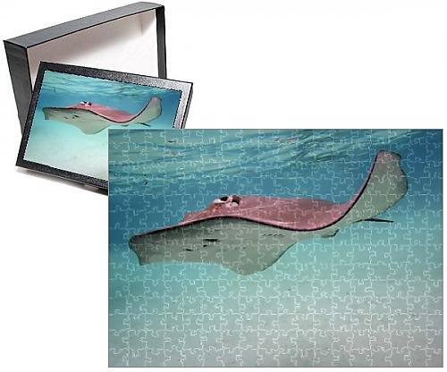 Photo Jigsaw Puzzle of STINGRAY - These large soft rays live on sand in the Moorea lagoon