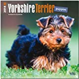 BrownTrout Yorkshire Terrier Puppies 2014 Wall