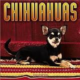 Chihuahuas 2004 Calendar