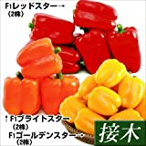 国華園 接木野菜苗 パプリカ スターセット 3種6株