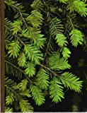 Evergreens (The Time-Life encyclopedia of gardening)