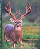 Observing & Evaluating Whitetails