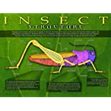 Entomology - Insect Structure Poster