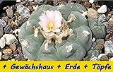 SAFLAX - Anzucht - Set - Kakteen - Peyotl Kaktus  - 20 Samen - Mit Gewächshaus