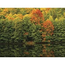 Brewster UMB91073 96-Inch by 126-Inch Autumn at the Lake Wall Mural