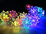 M&T TECH Solar Powered 20 LED String Lights For Christmas, Garden,Outdoor,Party.Patio,Lawn with 20 Double Lotus Flower(Multi color)