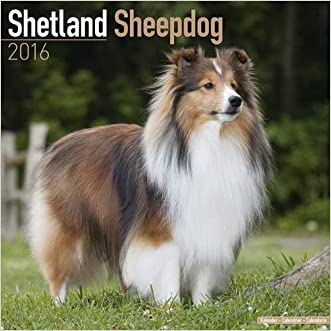 Shetland Sheepdog Calendar - Breed Specific Shetland Sheepdog Calendar - 2016 Wall calendars - Dog Calendars - Monthly Wall Calendar by Avonside