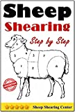 Sheep Shearing: How to shear a sheep step by step with no step skipped