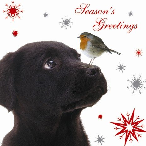 Season's Greetings Robin & Black Labrador Christmas Cards Pack