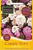 Candy Tuft Candytuft Fairy Mix 100 flower seeds/MULTI-BUY DISCOUNT/Will add that missing sparkle in the garden