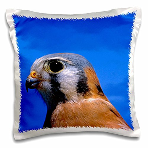 danita-delimont-birds-arizona-american-kestral-falcon-bird-us03-rer0047-ric-ergenbright-16x16-inch-p