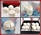 Hans Turnwald Mother of Pearl Set 4 Turbo Sea Shell Signed Silverplate Napkin Rings Gift Box